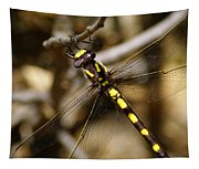 Pacific Spiketail Dragonfly On Mt Tamalpais 2 Tapestry