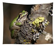 Pacific Treefrog Tapestry
