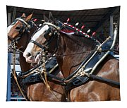 Pair Of Budweiser Clydesdale Horses In Harness Usa Rodeo Tapestry