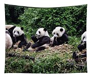 Pandas In China Tapestry