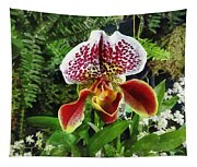 Paph Fiordland Sunset Orchid Tapestry