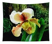 Paph Hellas Westonbirt Orchid Tapestry