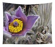 Pasque Flower Pulsatilla Halleri Tapestry