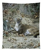 Bobcat Tapestry by Mae Wertz