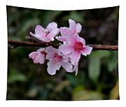 Peach Tree Blooms Miskitos Swoon Tapestry