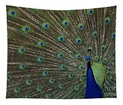 Peacock 17 Tapestry