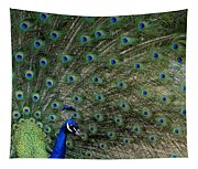 Peacock 8 Tapestry
