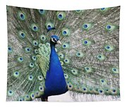 Peacock Fanning Tapestry