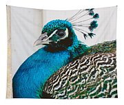 Peacock Square Tapestry