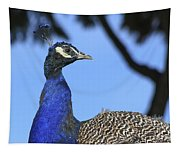 Indian Peacock Portrait Tapestry