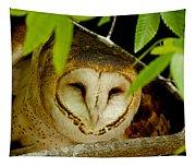 Peering Barn Owl Tapestry