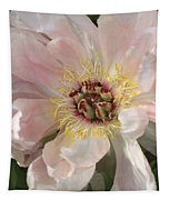 Peonie In Soft Pink Tapestry