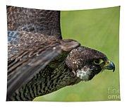 Peregrine Falcon 4 Tapestry