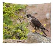 Peregrine Falcon Tapestry