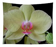 Phalaenopsis Fuller's Sunset Orchid No 2 Tapestry