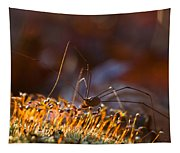 Phalangid Among The Moss Capsules Tapestry