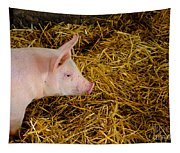 Pig Standing In Hay Tapestry