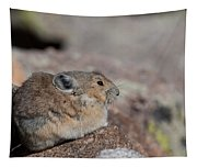 Pika In The Sun Tapestry
