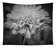 Pincushion Bw Tapestry
