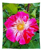 Pink And Red Striped Rose Tapestry