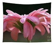Pink Daisy 1 Tapestry