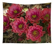 Pink Hedgehog Cactus Flowers  Tapestry