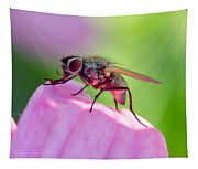Pink Reflection On Flies Body. Tapestry