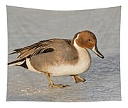 Pintail Duck Tapestry