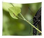 Pipevine Swallowtail Mother With Eggs Tapestry