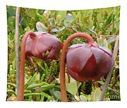 Pitcher Plant Tapestry
