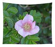 Pleasing Pink Tapestry