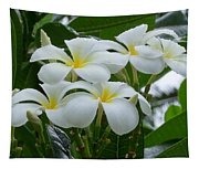 Plumeria In The Rain Tapestry