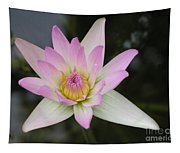 Pointed Pink Lily Tapestry