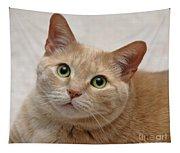 Portrait - Orange Tabby Cat Tapestry
