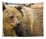 Portrait Of A Grizzly Tapestry