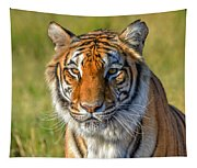 Portrait Of A Tiger Tapestry