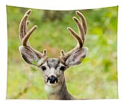 Portrait Of Mule Deer Buck With Velvet Antler  Tapestry