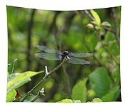 Posing Dragonfly Tapestry