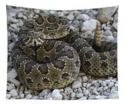 Prairie Rattlesnake South Dakota Badlands Tapestry