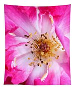 Pretty In Pink Rose Close Up Tapestry
