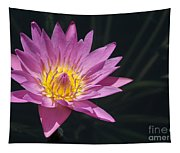 Pretty Pink And Yellow Water Lily Tapestry