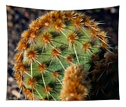 Prickly Cactus Leaf Green Brown Plant Fine Art Photography Print  Tapestry