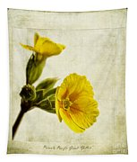 Primula Pacific Giant Yellow Tapestry