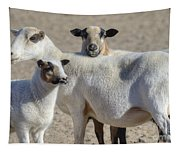 Professional Sheep Tapestry