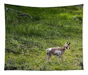 Pronghorn Antelope Among Wildflowers Tapestry