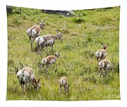 Pronghorn Antelope In Lamar Valley Tapestry