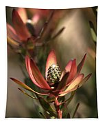 Protea  Tapestry