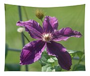 Purple Clemaits   # Tapestry