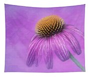 Purple Coneflower - Echinacea Purpura Tapestry