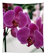 Royal Orchids  Tapestry